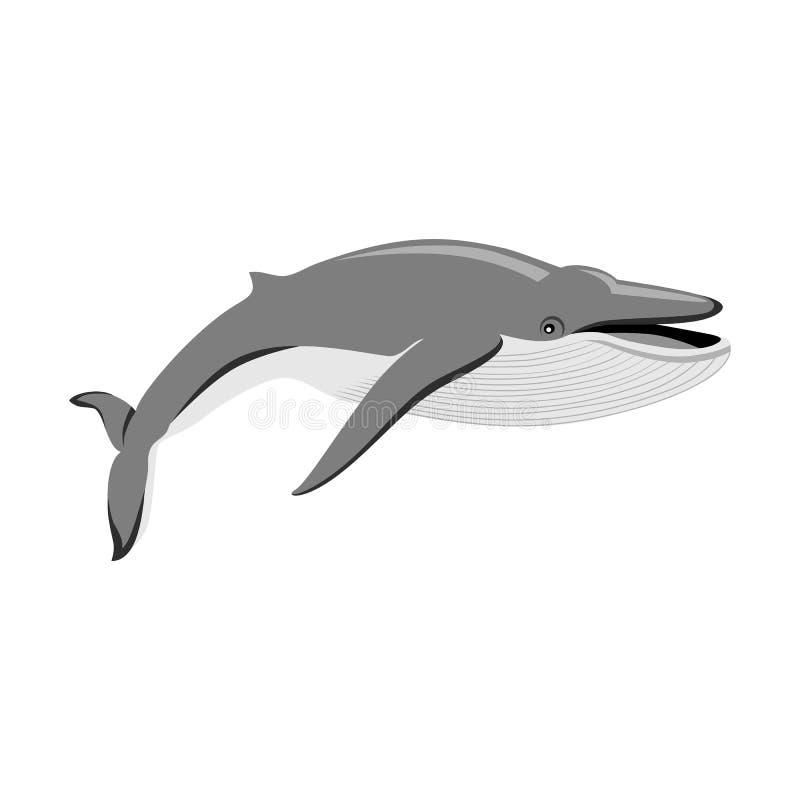 Μαύρη φάλαινα στο άσπρο υπόβαθρο ελεύθερη απεικόνιση δικαιώματος