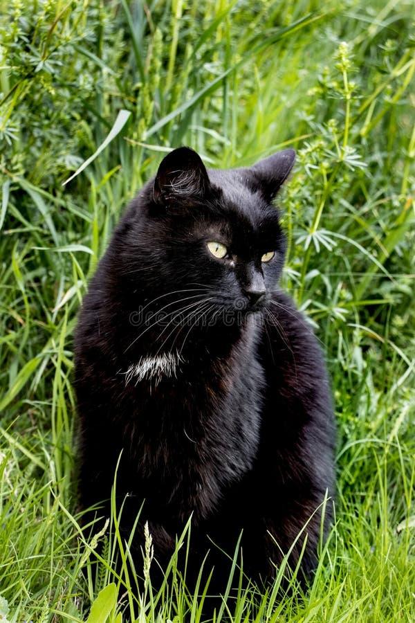 Μαύρη χαλάρωση γατών στη χλόη στοκ φωτογραφίες με δικαίωμα ελεύθερης χρήσης