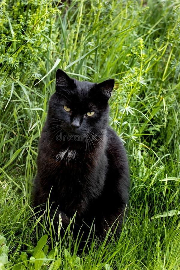 Μαύρη χαλάρωση γατών στη χλόη στοκ φωτογραφία με δικαίωμα ελεύθερης χρήσης