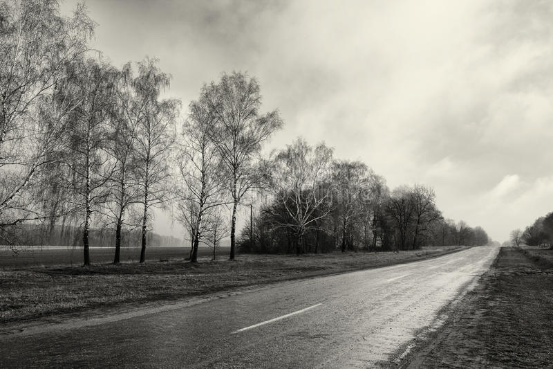 Μαύρος άσπρος κενός δρόμος επαρχίας φωτογραφίας, δασικό, νεφελώδες καιρικό τοπίο δέντρων σημύδων στοκ φωτογραφίες με δικαίωμα ελεύθερης χρήσης