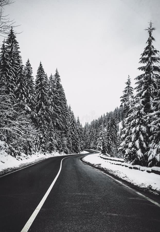Μαύρος δρόμος με πολλ'ες στροφές ασφάλτου στο χιονώδες δάσος στοκ φωτογραφία