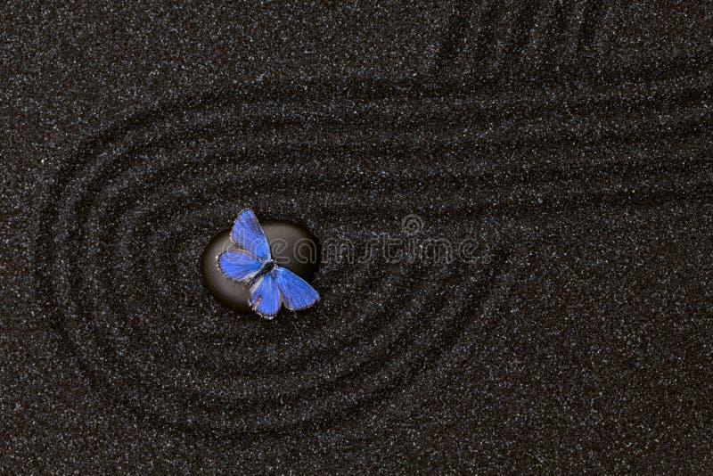 Μαύρος κήπος zen στη μαύρη άμμο σιταριού με μια μπλε πεταλούδα στοκ εικόνα με δικαίωμα ελεύθερης χρήσης