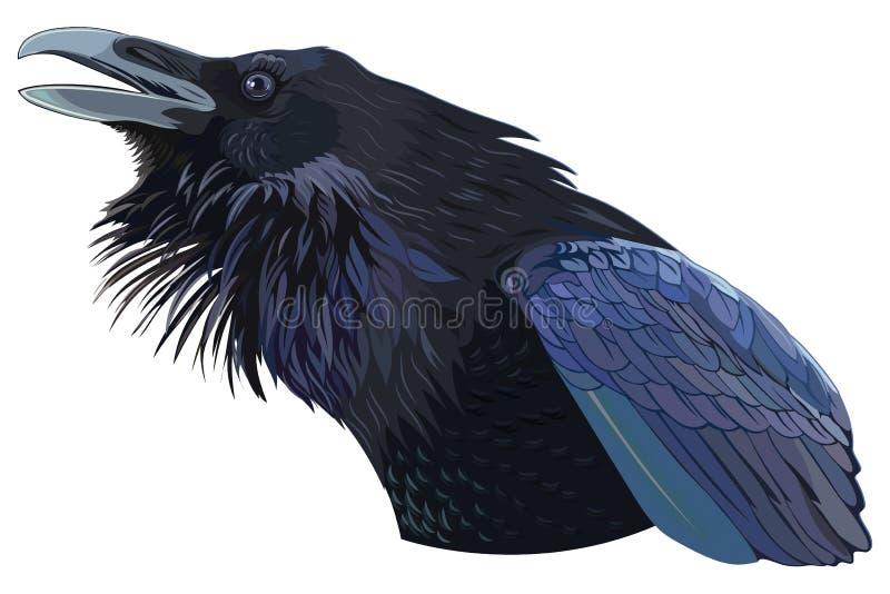 Μαύρος κόρακας Cawing ελεύθερη απεικόνιση δικαιώματος