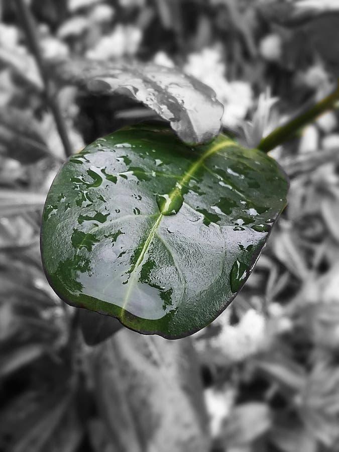 μαύρος πράσινος στοκ εικόνα με δικαίωμα ελεύθερης χρήσης