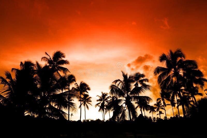 μαύρος φοίνικας νύχτας παρ στοκ φωτογραφία με δικαίωμα ελεύθερης χρήσης