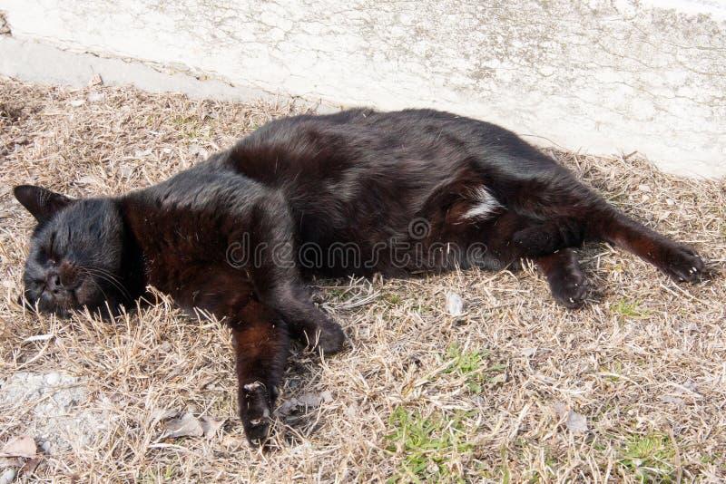 Μαύρος ύπνος γατών στη χλόη στοκ φωτογραφίες