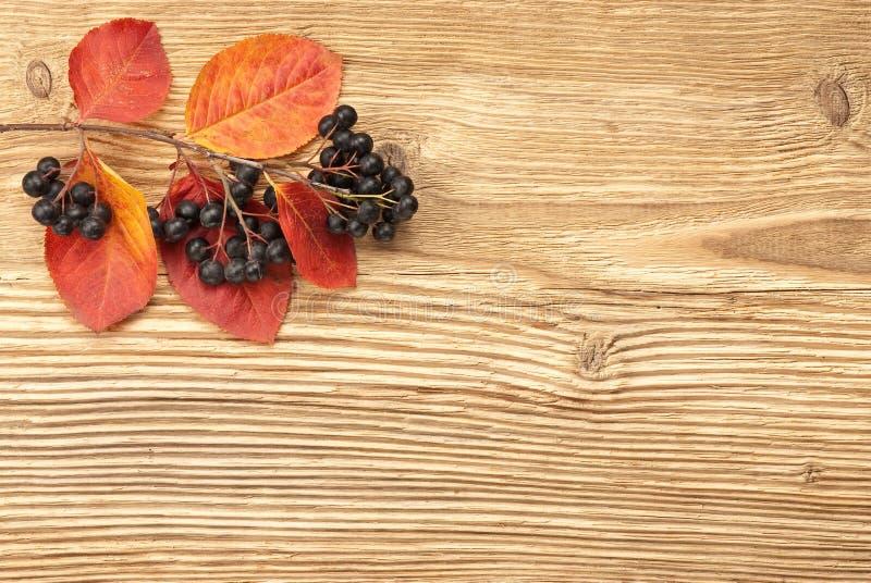 Μαύρος chokeberry στην ξύλινη ανασκόπηση στοκ φωτογραφίες
