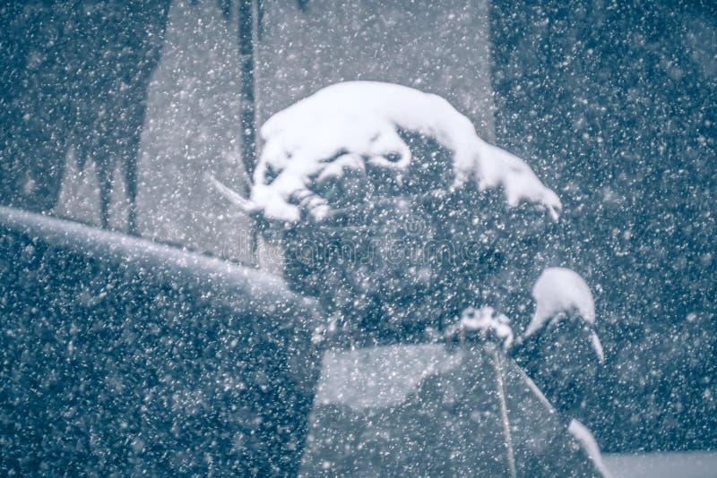 Μαύρο άγαλμα πάνθηρων που βλέπει μέσω των μειωμένων νιφάδων χιονιού στοκ εικόνες με δικαίωμα ελεύθερης χρήσης