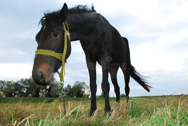μαύρο άλογο στοκ φωτογραφία με δικαίωμα ελεύθερης χρήσης