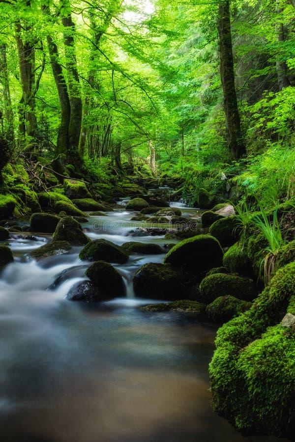 Μαύρο δάσος την άνοιξη στοκ εικόνα
