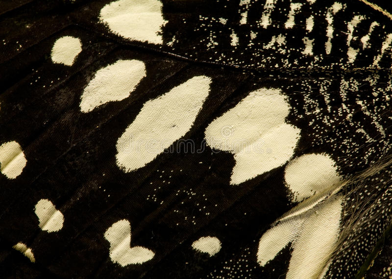 μαύρο άσπρο φτερό πεταλούδ στοκ εικόνα με δικαίωμα ελεύθερης χρήσης