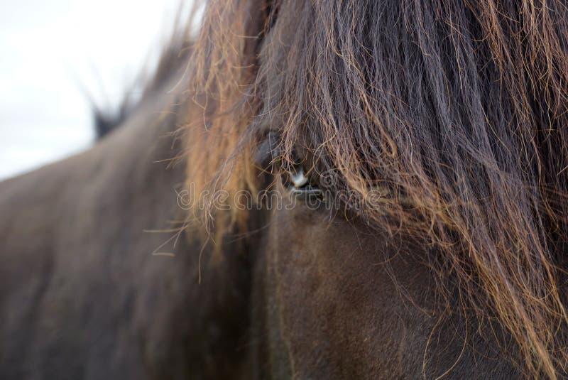 Μαύρο άλογο με τα μπλε μάτια στοκ φωτογραφίες με δικαίωμα ελεύθερης χρήσης