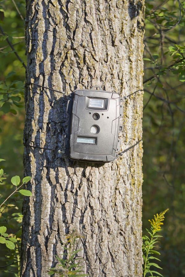 Μαύρο έκκεντρο ιχνών στο δέντρο λευκών για το κυνήγι ελαφιών στοκ εικόνα