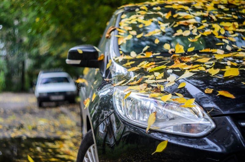Μαύρο αυτοκίνητο που καλύπτεται με τα κίτρινα πεσμένα φύλλα στοκ εικόνες