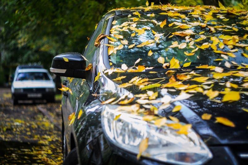 Μαύρο αυτοκίνητο που καλύπτεται με τα κίτρινα πεσμένα φύλλα στοκ εικόνες με δικαίωμα ελεύθερης χρήσης