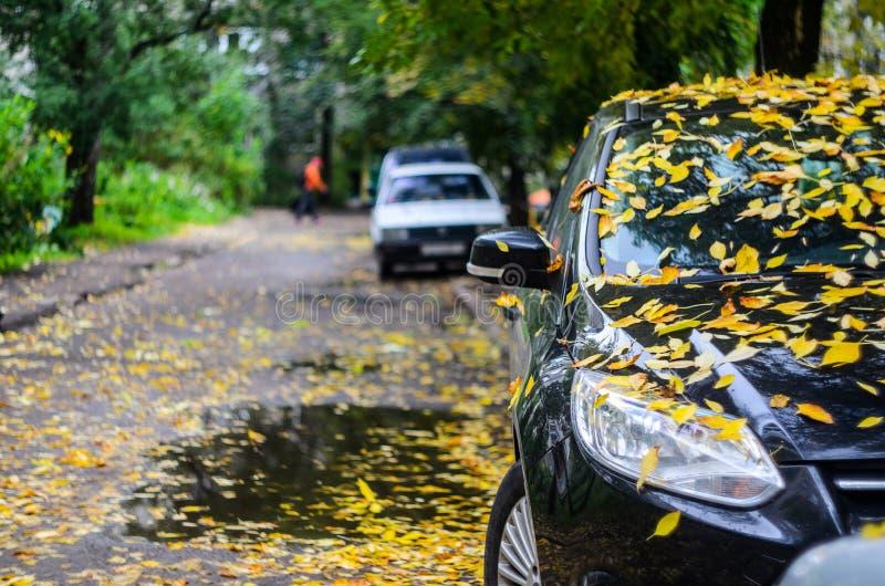 Μαύρο αυτοκίνητο που καλύπτεται με τα κίτρινα πεσμένα φύλλα στοκ φωτογραφίες με δικαίωμα ελεύθερης χρήσης