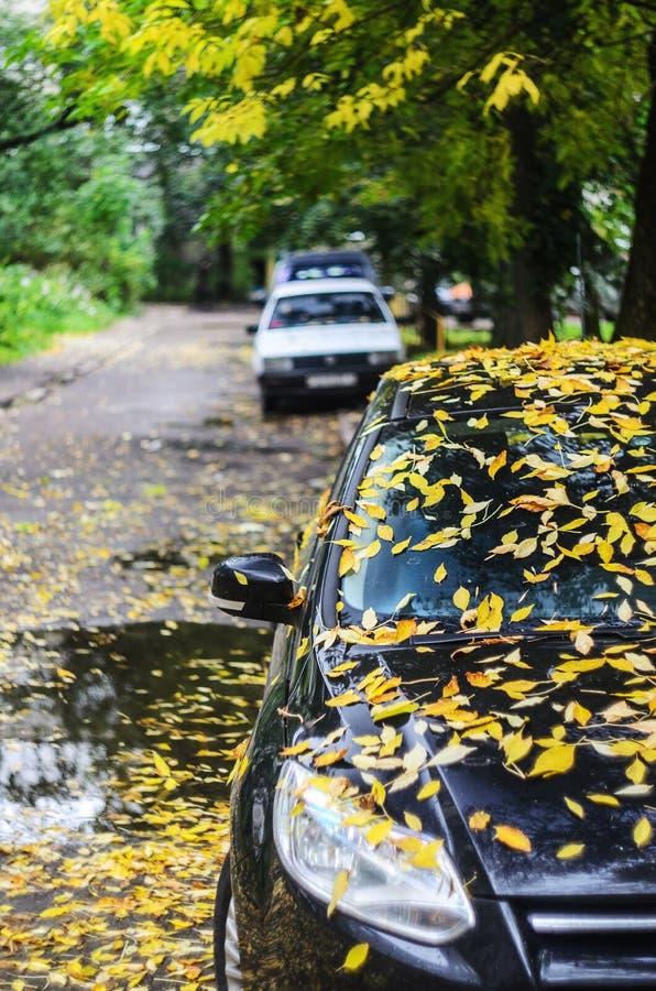 Μαύρο αυτοκίνητο που καλύπτεται με τα κίτρινα πεσμένα φύλλα στοκ φωτογραφία
