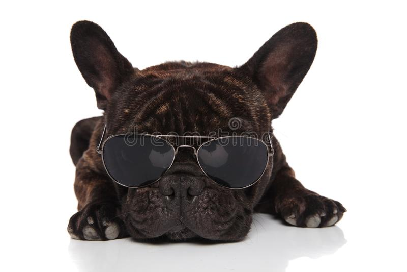 Μαύρο γαλλικό μπουλντόγκ που βρίσκεται φορώντας τα γυαλιά ηλίου αεροπόρων στοκ εικόνες