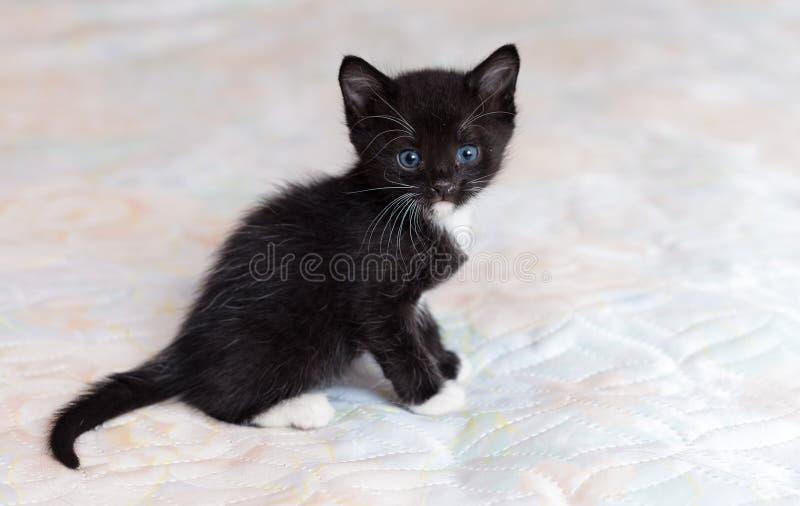 Μαύρο γατάκι στο κρεβάτι στοκ φωτογραφία με δικαίωμα ελεύθερης χρήσης