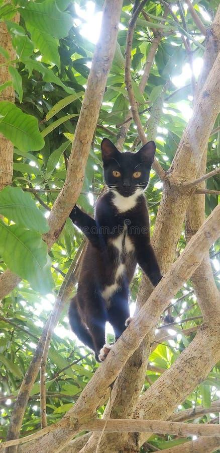 Μαύρο δέντρο η αιλουροειδής Τζαμάικα γατών στοκ φωτογραφίες