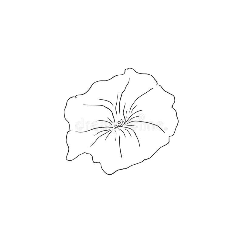 Μαύρο διάνυσμα λουλουδιών Dichondra τέχνης γραμμών διανυσματική απεικόνιση