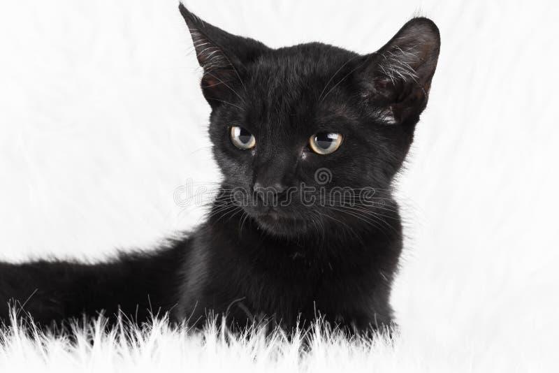 μαύρο λευκό στοκ εικόνα με δικαίωμα ελεύθερης χρήσης