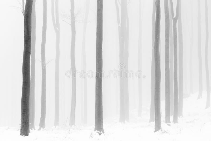 Μαύρο και άσπρο δάσος στην ομίχλη και στην παγωμένη λαβή τον σκληρό χειμώνα στοκ εικόνες