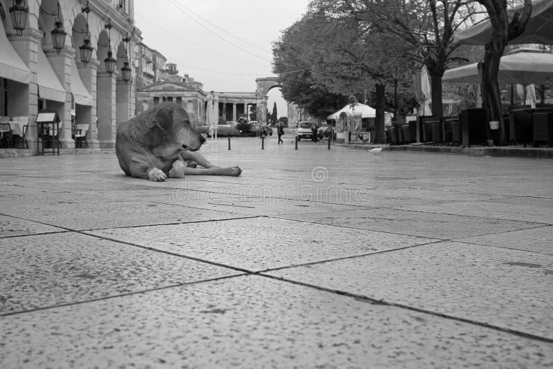 Μαύρο και άσπρο σουτ ενός χαριτωμένου σκύλου ξαπλωμένου στο δρόμο κοντά σε ένα κτίριο στην Κόρφου της Ελλάδας στοκ εικόνες