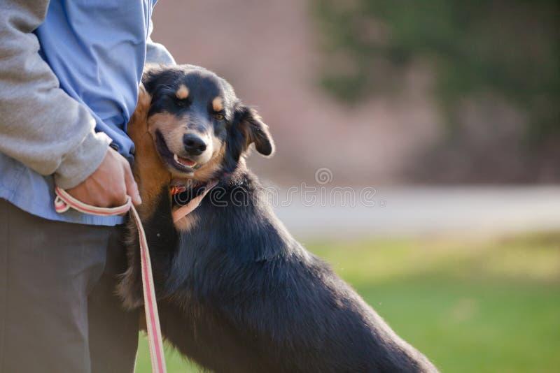 Μαύρο και καφετί σκυλί που αγκαλιάζει ένα πρόσωπο στοκ εικόνα