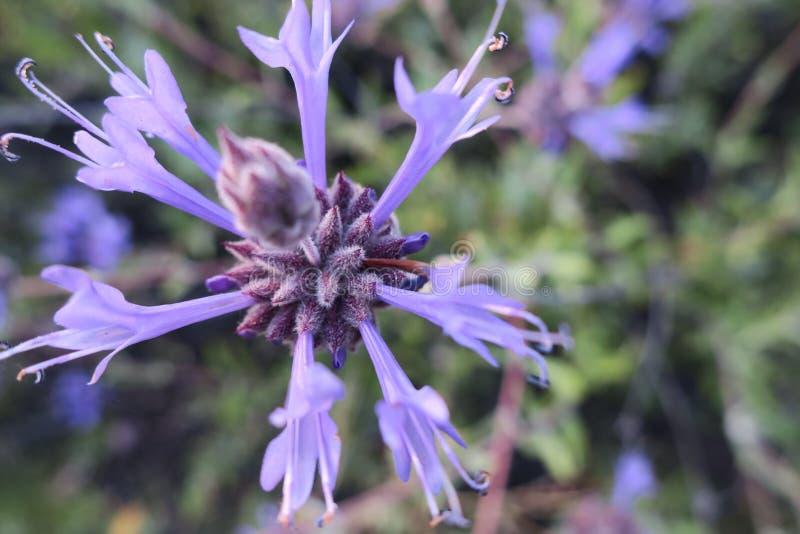 Μαύρο λογικό λουλούδι στοκ φωτογραφία με δικαίωμα ελεύθερης χρήσης