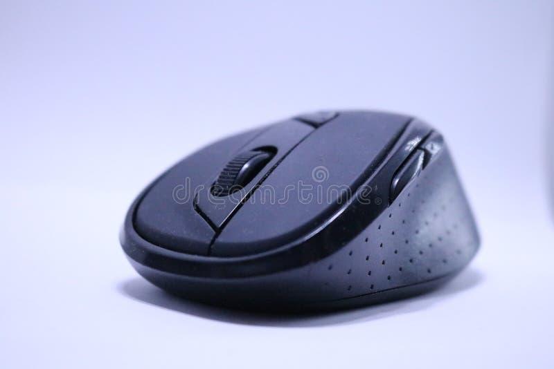 μαύρο ποντίκι στοκ εικόνα με δικαίωμα ελεύθερης χρήσης