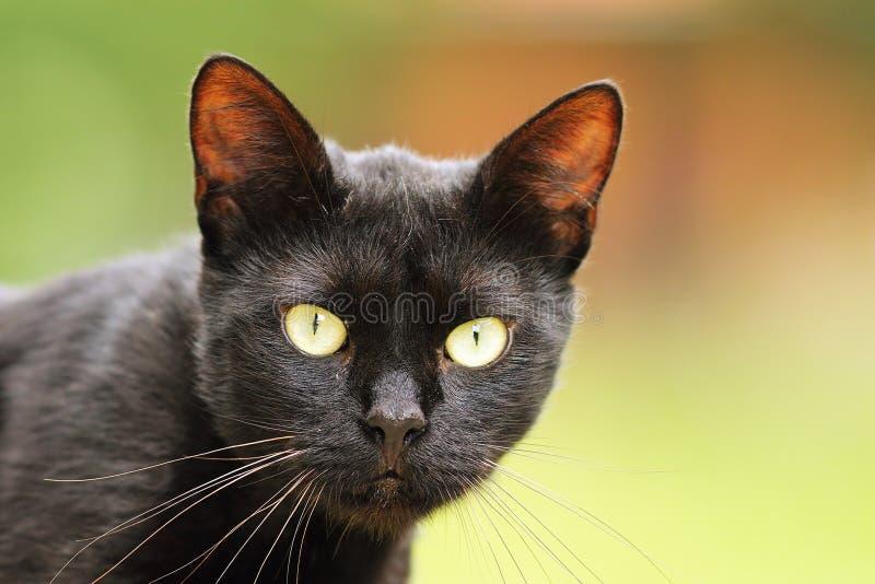 Μαύρο πορτρέτο γατών με τα μεγάλα πράσινα μάτια στοκ εικόνα