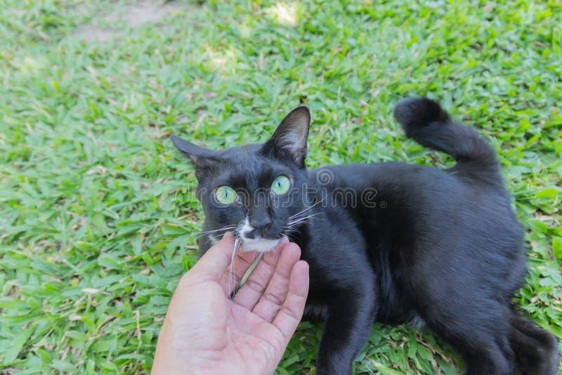Μαύρο πορτρέτο προσώπου γατών ανατριχιαστικό απαίσιο στοκ εικόνες