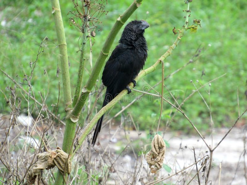 Μαύρο πουλί που προσκολλάται επάνω σε πράσινες εγκαταστάσεις στοκ φωτογραφία με δικαίωμα ελεύθερης χρήσης
