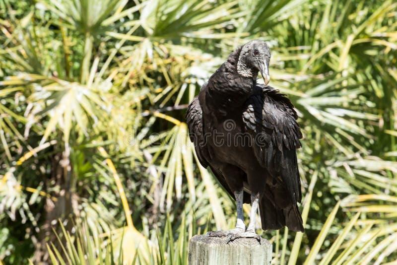 Μαύρο πουλί σε ένα δέντρο κοντά στο νερό στοκ εικόνες