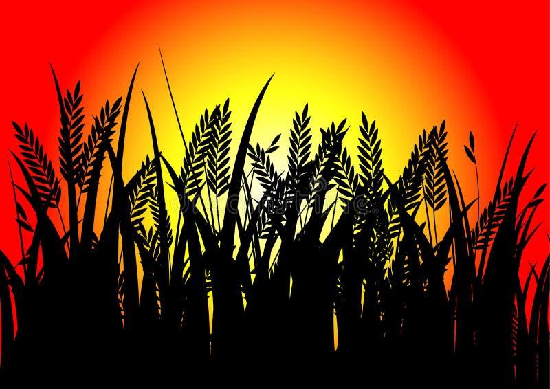 Μαύρο ρύζι και ηλιοβασίλεμα στοκ εικόνα με δικαίωμα ελεύθερης χρήσης