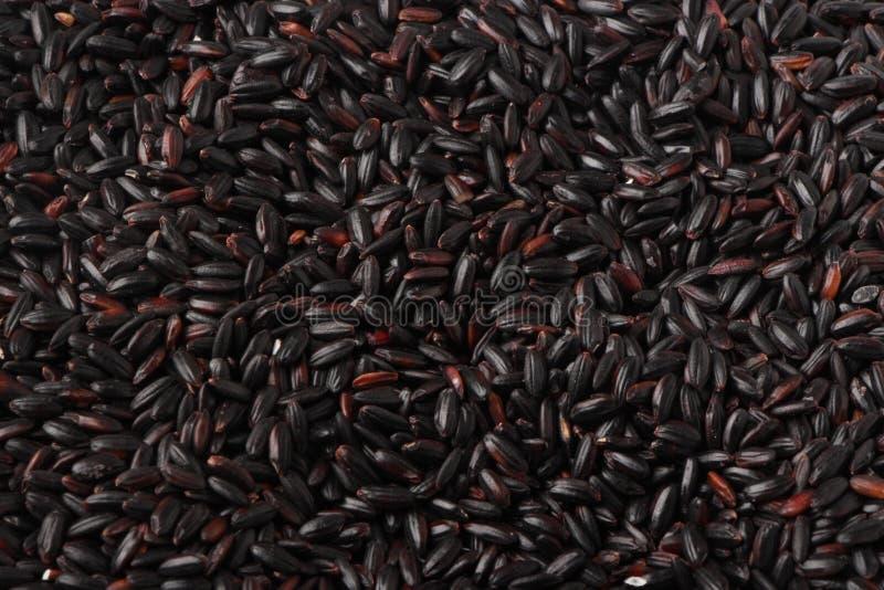 Μαύρο ρύζι στοκ φωτογραφίες με δικαίωμα ελεύθερης χρήσης