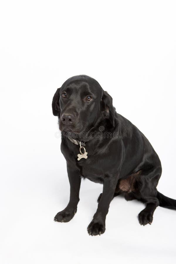 μαύρο σκυλί που φαίνεται &s στοκ φωτογραφίες με δικαίωμα ελεύθερης χρήσης