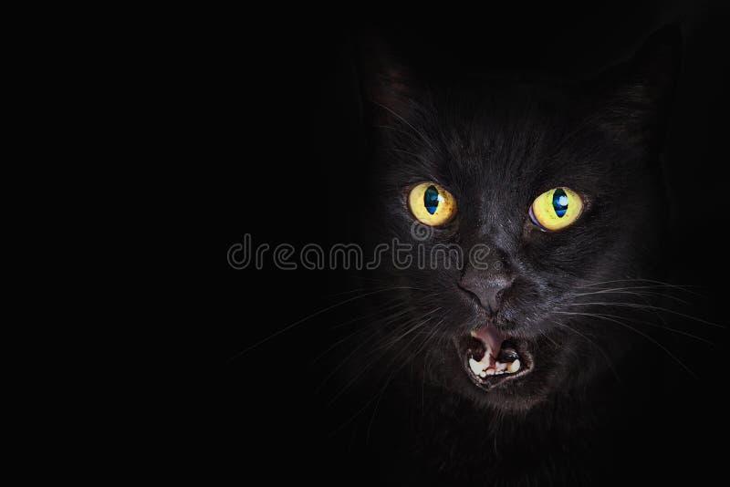 Μαύρο στόμα γατών κινηματογραφήσεων σε πρώτο πλάνο ανοικτό στοκ φωτογραφία