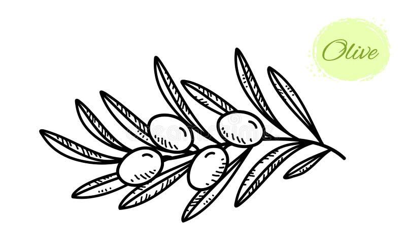 Μαύρο συρμένο χέρι κλαδί ελιάς με τα φύλλα διανυσματική απεικόνιση