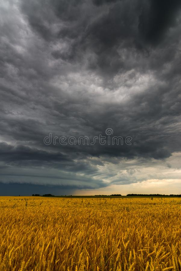 Μαύρο σύννεφο θύελλας επάνω από τον τομέα σίτου στοκ εικόνες με δικαίωμα ελεύθερης χρήσης