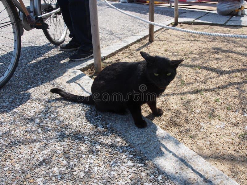 Μαύρο ταξίδι της Ιαπωνίας γατών με πρωταγωνιστή στοκ εικόνες με δικαίωμα ελεύθερης χρήσης