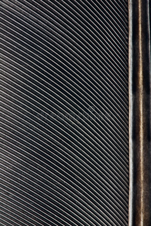 μαύρο φτερό κοράκων στοκ εικόνες
