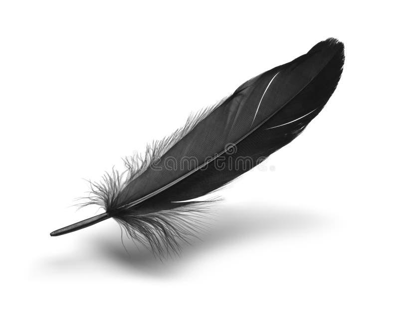 Μαύρο φτερό στοκ φωτογραφία