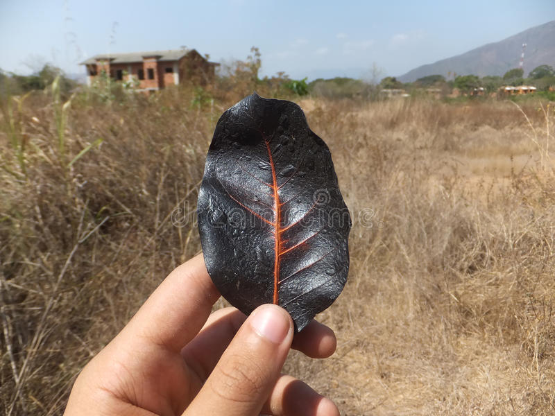 Μαύρο φύλλο που επηρεάζονται από την ακτινοβολία και ένα εγκαταλειμμένο σπίτι στην αριστερά/αστικά εξερεύνηση/το URBEX στοκ εικόνες με δικαίωμα ελεύθερης χρήσης