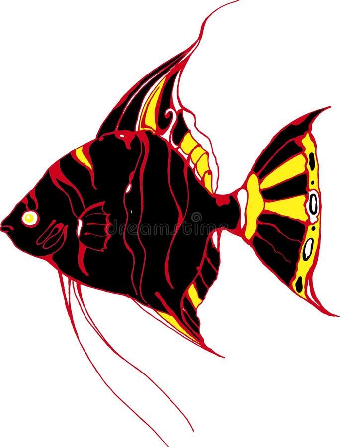 Μαύρο Angelfish στοκ φωτογραφία