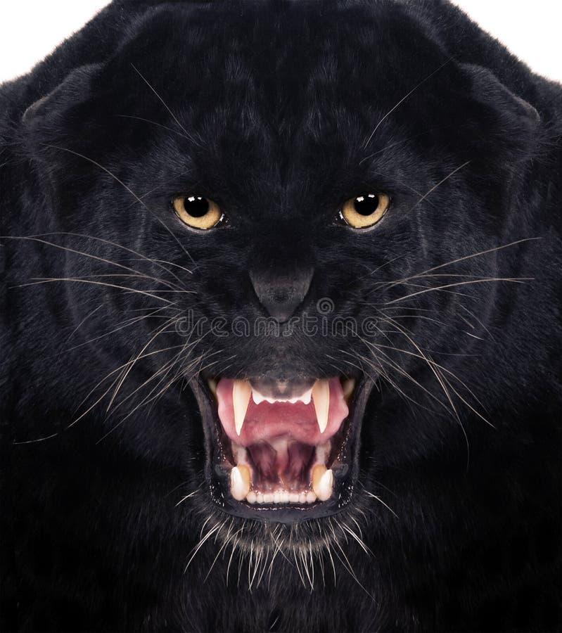 μαύρο leopard