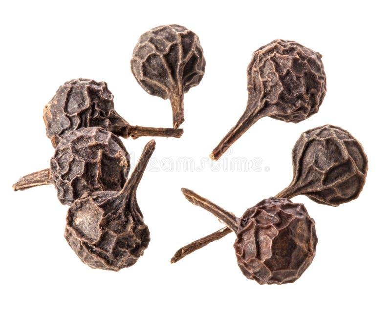 Μαύρο Peppercorn στοκ εικόνα