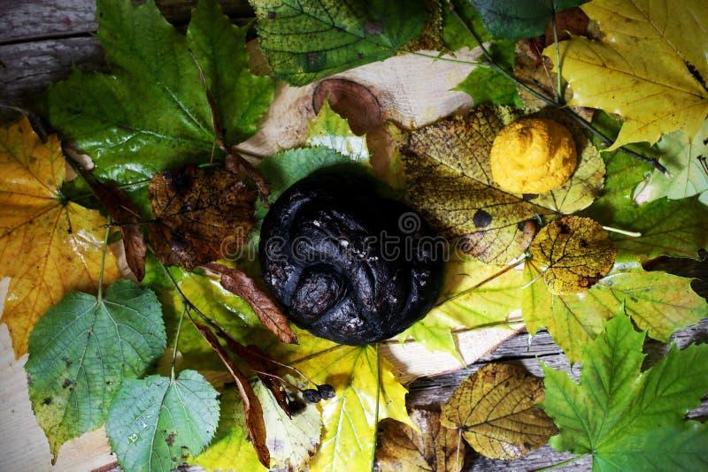 Μαύρο pretzel και καρότων φυτόχωμα για το πρόχειρο φαγητό αποκριών, απόκοσμο στοκ εικόνα