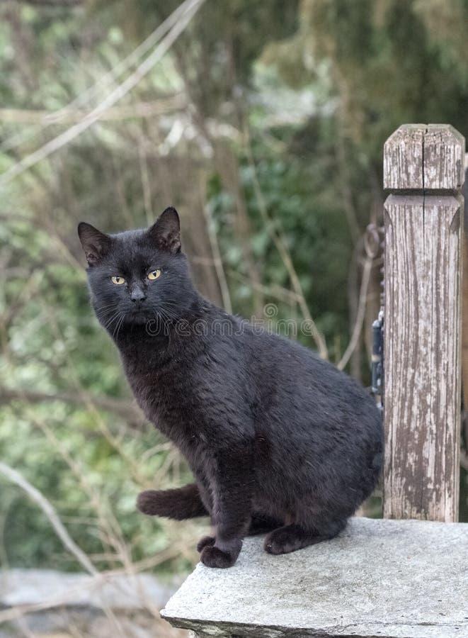 Μαύρο tomcat στοκ φωτογραφία με δικαίωμα ελεύθερης χρήσης